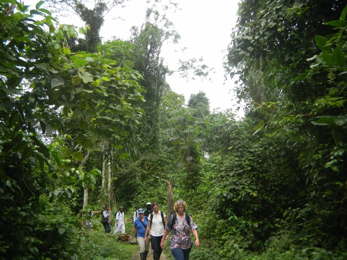 A line of people walk down a path in a jungle area